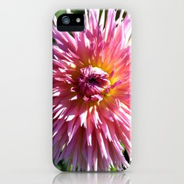 BEAUTIFUL PINK DAHLIA IN THE LATE AFTERNOON SUNSHINE iPhone Case