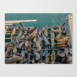 Haul-Out Canvas Print