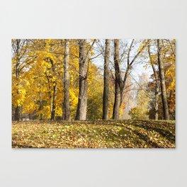 fallen leaf maple Canvas Print