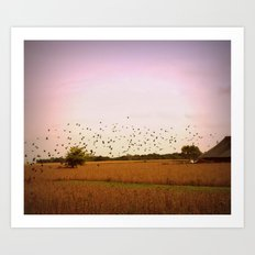 Birds flying at sunset Art Print