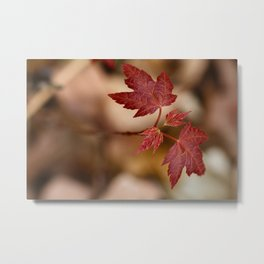 New Red Maple Leaf Metal Print