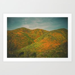 California Poppies 020 Art Print