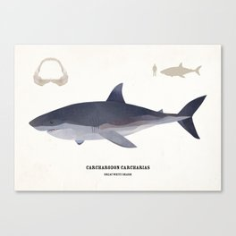The Great White Shark Canvas Print