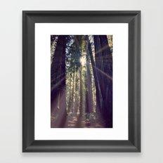 Redwoods Hike Framed Art Print