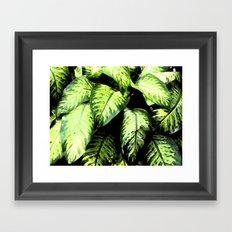 rainforest leaves Framed Art Print