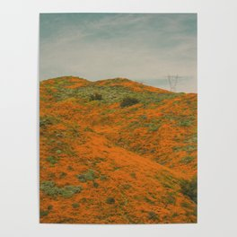 California Poppies 030 Poster