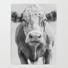 Animal Photography | Cow Portrait Minimalism | Farm animals | black and white Poster