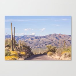 Down Desert Roads, IV Canvas Print