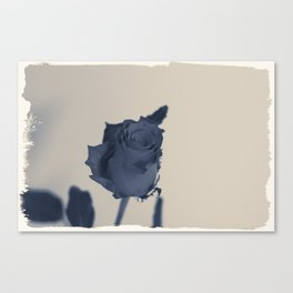 Blue rose Canvas Print