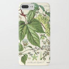 Humulus lupulus (common hop or hops) - Vintage botanical illustration iPhone Case