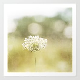 Queen Anne's Lace Nature Photography, Pale Yellow Floral Photography Art Print