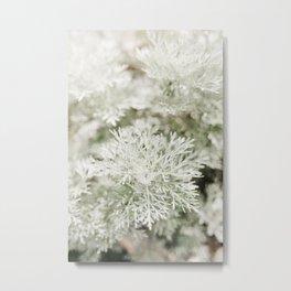 Artemisia Silver Mound. Minimalistic print - fine art photography Metal Print