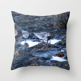 Sandpipers Birds feeding Rock Tide Pool Seashore Throw Pillow