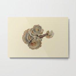 Polyporus versicolor Metal Print
