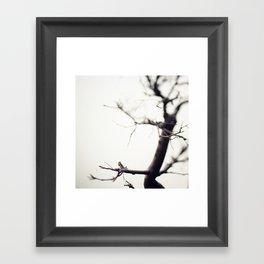 Small Tree Framed Art Print