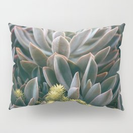 Graptoveria Study #3 Pillow Sham