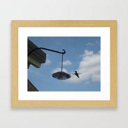 Hummingbird in Flight Framed Art Print
