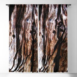 Ancient olive tree wood close-up Blackout Curtain
