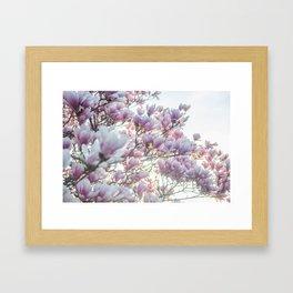 Magnólias rosa florescendo na primavera!! Framed Art Print