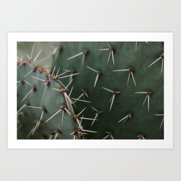 Cactus Close-Up Art Print