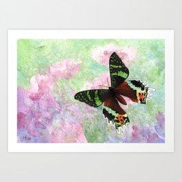 Urania Ripheus Butterfly Art Print