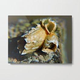 Barnacle Cluster Metal Print