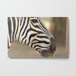 Common zebra (Equus quagga) Metal Print