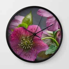 HELLEBORUS NIGERCORS FLOWER Wall Clock