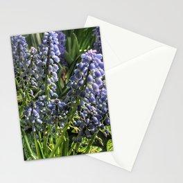 Hyacinths at Vander Veer Botanical Park Stationery Cards