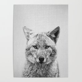 Coyote - Black & White Poster