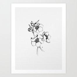 Helleborus Art Print