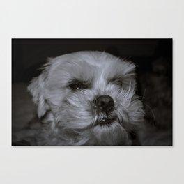 Le Grump Canvas Print