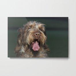 Brown Roan Italian Spinone Dog Head Shot Metal Print