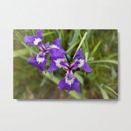 Wild Iris Photography Print Metal Print