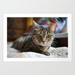 Soviet Cat Art Print
