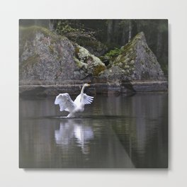 Welcome Spring White Swan On A Dark Nature Background Metal Print