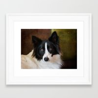 border collie Framed Art Prints featuring Border Collie by lifeandthat photography