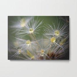 Dandelion Water Drop Macro 10 Metal Print