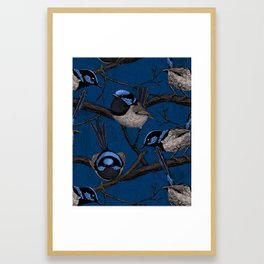Night fairy wrens Framed Art Print