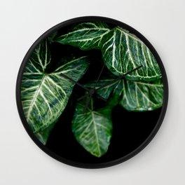 Green leaf of Colocasia esculenta Wall Clock