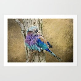 Lilac Breasted Roller resting. Art Print