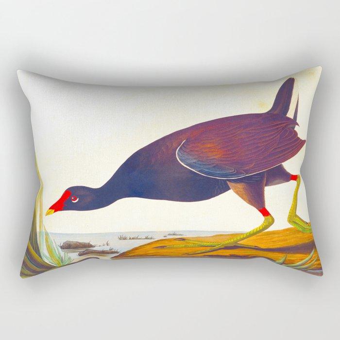 Common Gallinule John James Audubon Scientific Illustration Birds Of America Drawings Rectangular Pillow