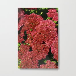 Red Sedum Metal Print