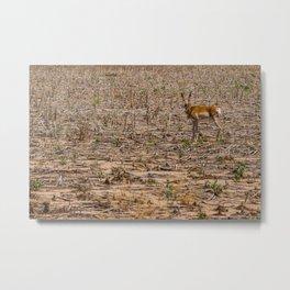 The Antelope's Field Metal Print
