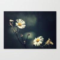 daisy Canvas Prints featuring Daisy by Pascal Deckarm Fine Art