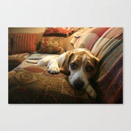 Sleepy Bruno  Canvas Print
