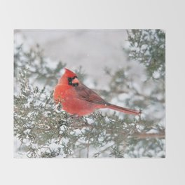 Winter's Beauty Cardinal Throw Blanket