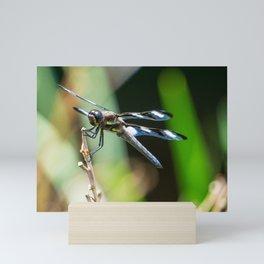 Twelve Spotted Skimmer - Front Mini Art Print