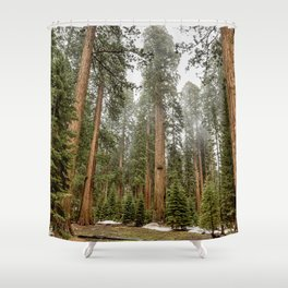 Sequoias in the Fog Shower Curtain