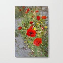 Poppies in Jerusalem Metal Print